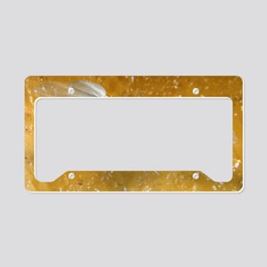 Fruit fly, SEM License Plate Holder