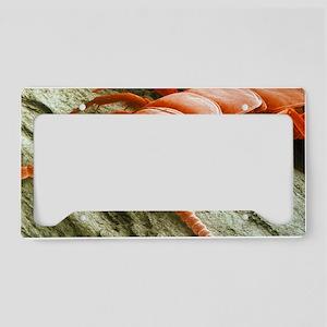 Garden centipede, SEM License Plate Holder