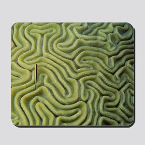 Goby Mousepad