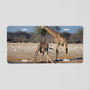 Giraffes Aluminum License Plate