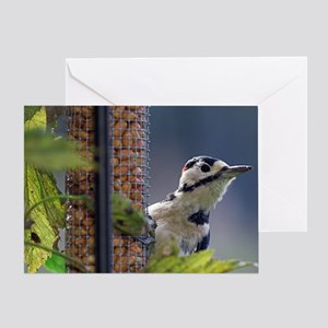 Great spotted woodpecker feeding Greeting Card