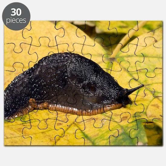 Great black slug Puzzle