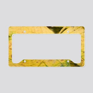 Great black slug License Plate Holder
