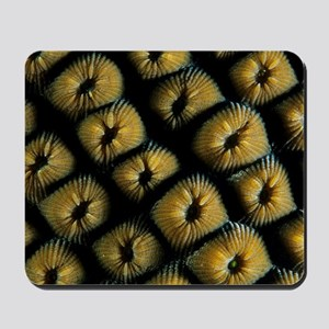 Great star coral Mousepad