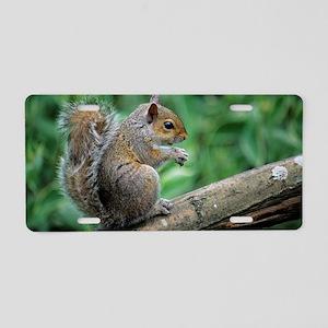 Grey squirrel Aluminum License Plate