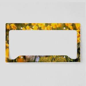 Grey squirrel amongst daffodi License Plate Holder