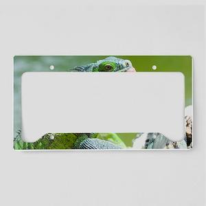 Green iguana License Plate Holder