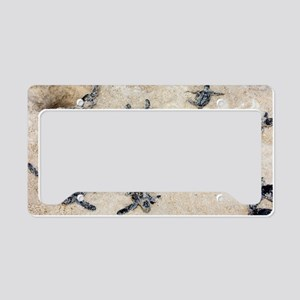Green turtle hatchlings License Plate Holder