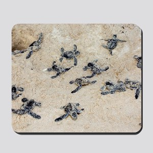 Green turtle hatchlings Mousepad