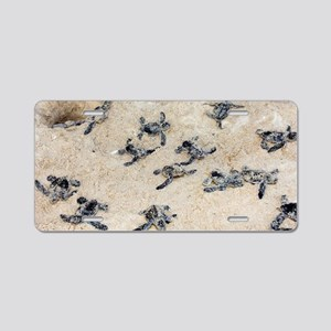 Green turtle hatchlings Aluminum License Plate