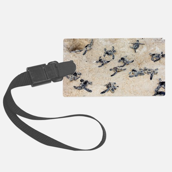 Green turtle hatchlings Luggage Tag