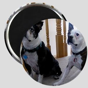BostonTerrier dogs Magnet