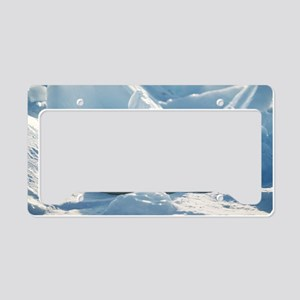 Harp seal pup License Plate Holder