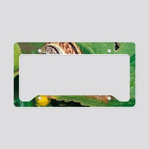 Land snail License Plate Holder