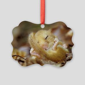 Dormouse Picture Ornament
