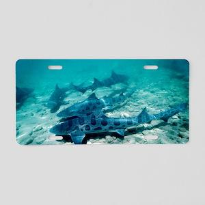 Female leopard sharks Aluminum License Plate