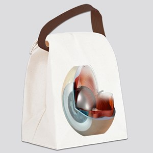 Eye anatomy, artwork Canvas Lunch Bag