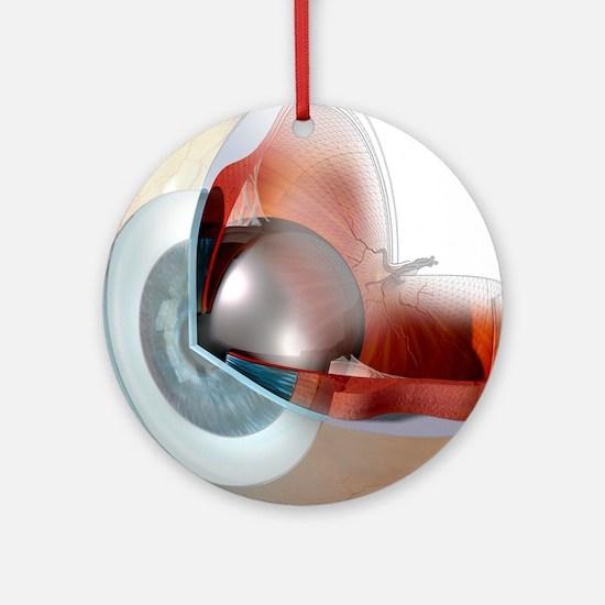 Eye anatomy, artwork Round Ornament