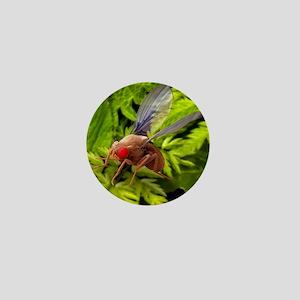 Fruit fly, SEM Mini Button