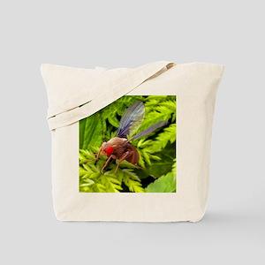Fruit fly, SEM Tote Bag