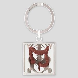 Healthy large intestine, artwork Square Keychain