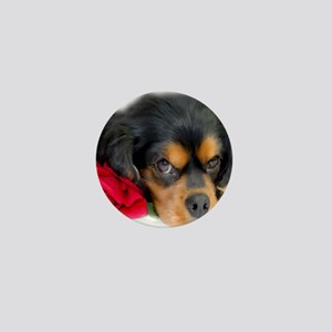 Cavalier King Charles Spaniel With Red Mini Button