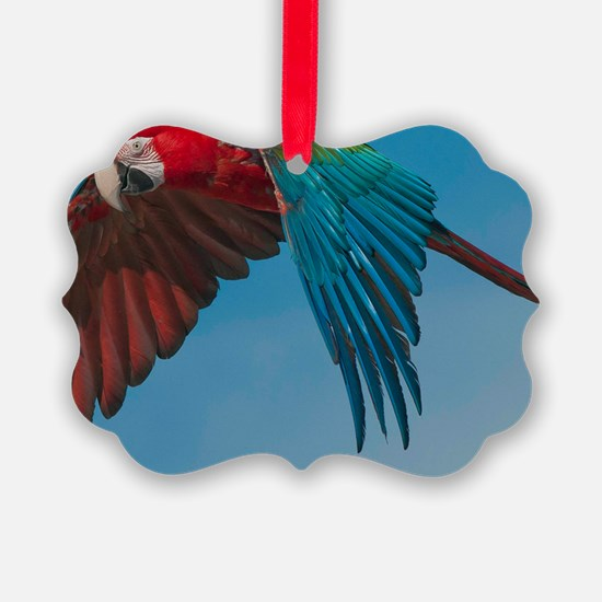 Green-winged Macaw Steve Duncan Ornament