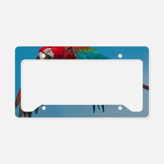 Green-winged Macaw Steve Dunc License Plate Holder