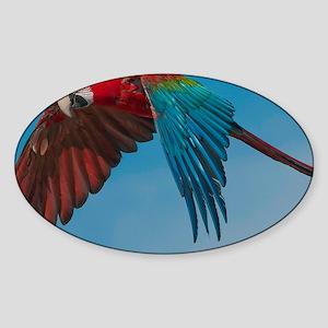 Green-winged Macaw Steve Duncan Sticker (Oval)