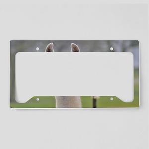Nicholas License Plate Holder