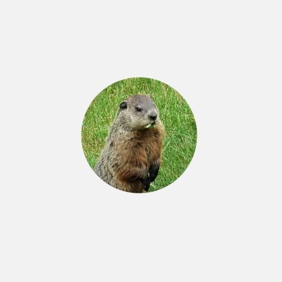 Woodchuck Eating Mini Button