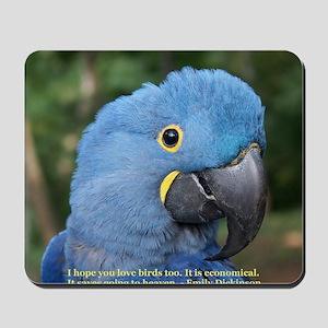 Hyacinth Macaw JM Csaky Mousepad