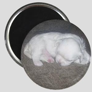 Tiny Pup Magnet
