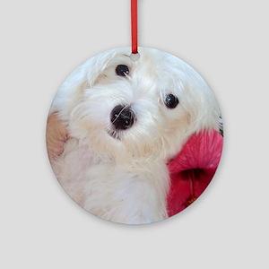 Adorable Ali - Maltese Puppy Round Ornament