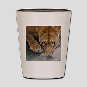 Serengeti Lioness Shot Glass