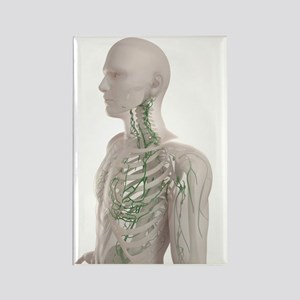 Lymphatic system, artwork Rectangle Magnet
