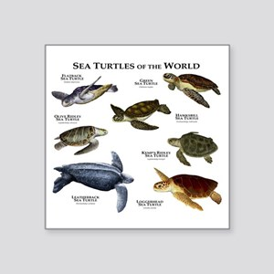 "Sea Turtles of the World Square Sticker 3"" x 3"""