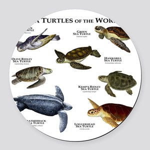 Sea Turtles of the World Round Car Magnet