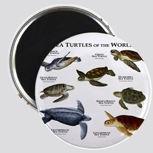 Sea Turtles of the World Magnet
