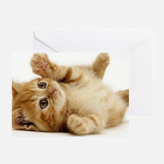 Orange kitten Greeting Card