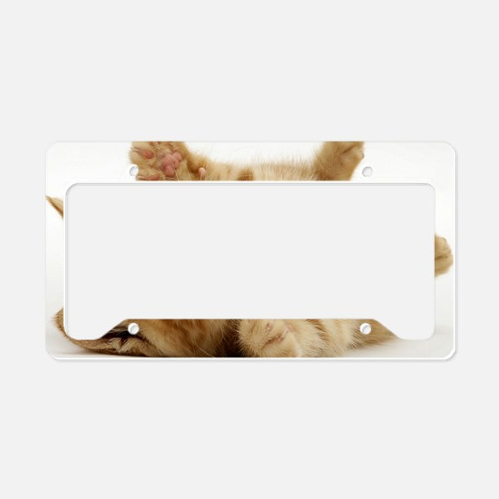 Orange kitten License Plate Holder