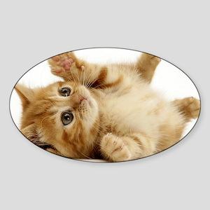 Orange kitten Sticker (Oval)