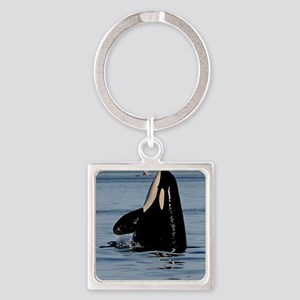 Spy Hopping Orca Square Keychain
