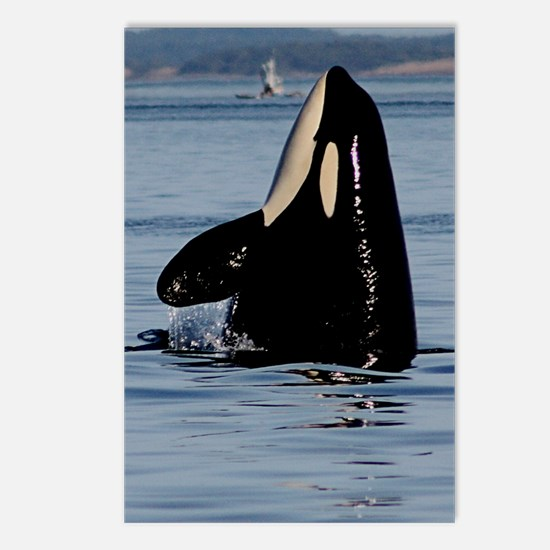 Spy Hopping Orca Postcards (Package of 8)