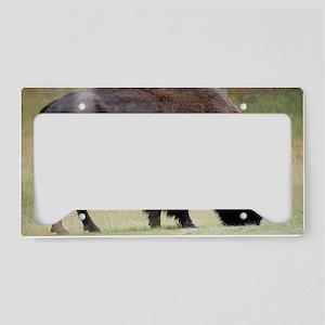 Big Buffalo in Yellowstone Pa License Plate Holder