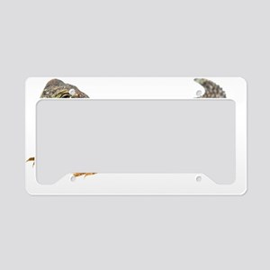 Uromastix License Plate Holder
