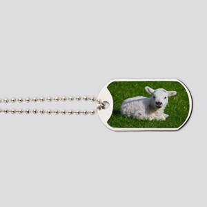 Baby lamb Dog Tags
