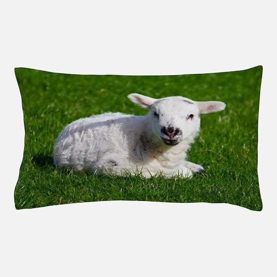 Baby lamb Pillow Case