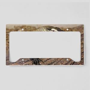 Komodo Dragons License Plate Holder