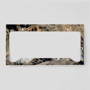 Amur Leopard License Plate Holder